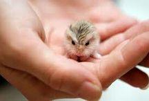 Cool hamster stuff