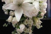 Flores - arranjos