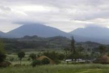Rwanda Safaris / Find packages of Rwanda Safaris to taking you for gorilla trekking, wildlife adventure, city tours, birding, cultural trips and so much more.Visit - http://www.travelhemispheres.com/rwanda-safaris.html