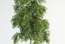 vizualization plants foto / rostliny, které se dají použít při vytvoření vizualizací ve photoshopu