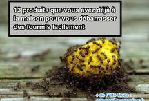 astuces fourmis