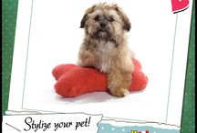 stylize your pet