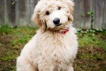 I want a dog!!!
