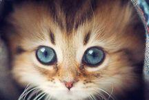 gatos / con manchones