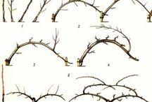 формированные деревья