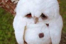 I heart OWLS!!! / by Marina Torres