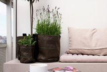 Flower & plant inspo