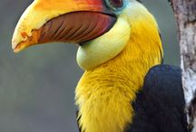 Tukane, Hornvögel