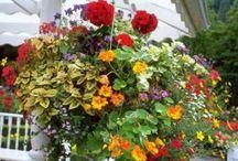 Gardening / by Myra Jane Biggers