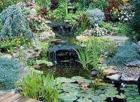 small pond... for backyard