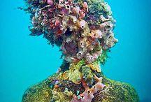 Underwater / The beauty of marine life