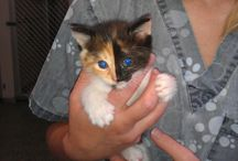 Adoption Kitten Program