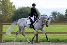 Horses of Rosewood