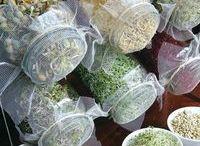 sementes que fazem a saúde
