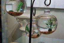 aqwariumpflsnzen