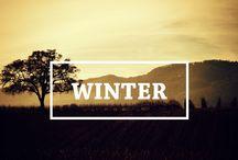 Winter / Vineyards in Winter