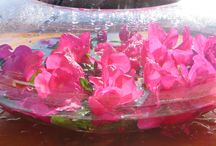 floating bouquets / Fun to see how long blooms literally last lazily lounging in pools of water