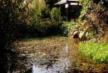 Ogrody, inspiracje / Ogrody, wnętrza ogrodowe, inspiracje, kopozycje