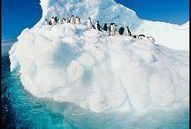 북극 남극