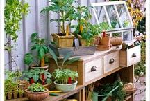 >>Garden Ideas