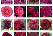 розы и компаньоны