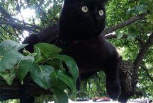 Черный магический кот | Black magic cats / Самый магический черный кот https://ok.ru/group/53327688892593