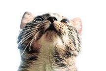 Smelly Cat / by Melanie Richardson