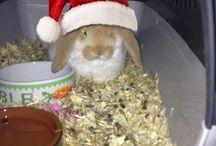 My rabbit Gosan