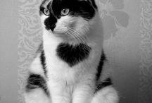 Cats :x