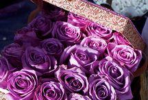 Purple: The color of dream / purple mauve