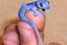 Miniature gecko