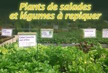 Potager / Les légumes du potager