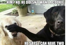 Perros, perritos, perrotes!