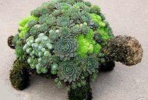 Garden Succulent