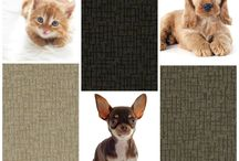 Tuftex's Pet Protect Collages / Tuftex's new STAINMASTER Pet Protect Products