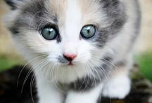 Cute Cats - not soap related