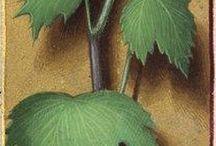 Medieval flora