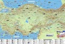 Türkiye'nin tatlı su ve deniz balıkları