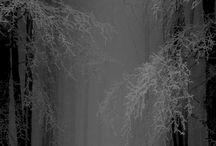 season : au coeur de l'hiver