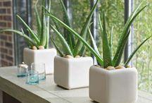 Plantes interieur