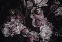 vi. les fleurs
