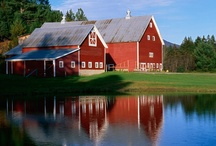i LOVE BARNS / by Becky Voss Sitter