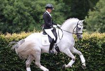 WOW Horses