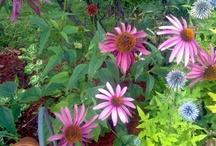 Mes réalisations floral