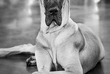 Dogs Life   Vida de Perros / Dogs Life pictures   Imágenes de Vida de Perros