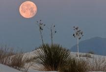 Moon Goddess / by Lynn Fang