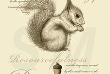 squirrel / by aseaofsunshine