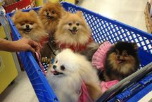 Pomeraniaans