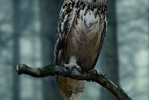 "My Favorit Animal ""Owl"""