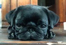 Pug Love ♡♡